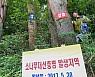 `재선충병' 확산… 전남 12월15일까지 소나무류 이동 특별단속