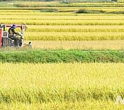 농림어업 인구 274만명 '사상 최저'…고령화도 가속화