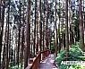 전남 `치유의 숲' 인기…화순 만연산 1년만에 31만명 방문