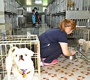 반려견 가득한 광주동물 보호소