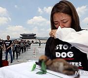 '복날 희생당하는 동물 이제는 없어야 합니다'