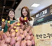 농협, 올해 첫 출하된 햇 호박 고구마 판매