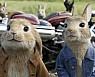 토끼띠, 유부 전용 부자 되는 법