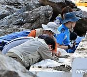 [금주 뉴시스 포토④]내륙서 붉은불개미 첫 발견