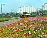 겨울 문턱 무색…가을꽃 수놓은 황룡강