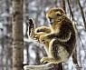 원숭이띠 ㄱ·ㅂ·ㅈ 성씨, 가정사로 갈등