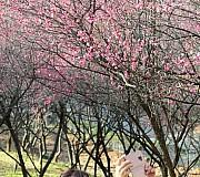 봄, 봄, 봄이 오네요