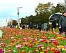 '가장 긴 꽃강' 황룡강의 봄 더 화려해진다