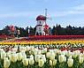 벚꽃은 엔딩 봄꽃은 앤딩···튤립·철쭉·장미까지 풍성