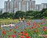 미스트롯 열창하는 '장성 홍길동 꽃길축제' 24일 팡파르