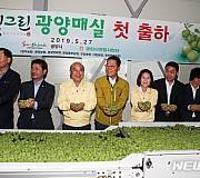2019년 광양 매실 출하 본격화