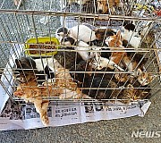 담양 불법 동물시장