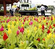 광주 북구, 도심 여름꽃 식재