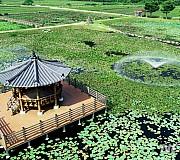 초여름 더위 식혀주는 상리연꽃공원 분수