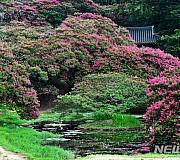 백일홍 만개한 담양 명옥헌 원림