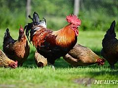 닭띠, 책임있게 말하고 행동하세요