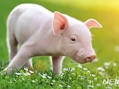 [원추 오늘의운세]돼지띠, 자만심 버리세요