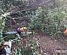 속초서 산불피해목 벌목하던 60대 나무 맞아 숨져