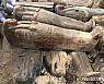 이집트 나일강 유역에서 고대 목관 20여 개 발견.