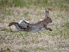 [원추 오늘의운세]토끼띠, 서두르지 말고 순서대로 진행하세요